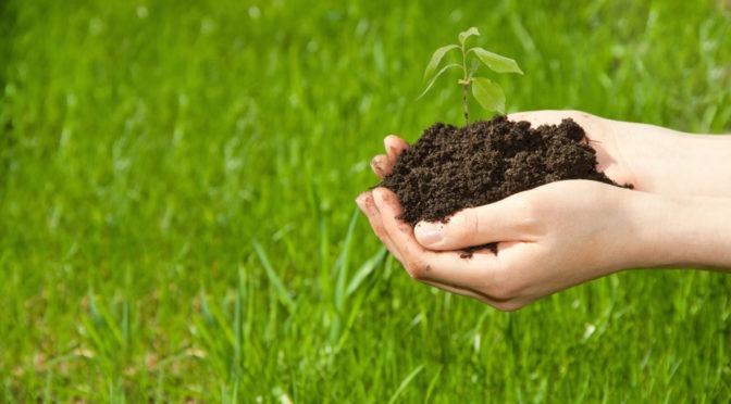 Planta de pistachos de Agroforestales ESLA para la próxima campaña