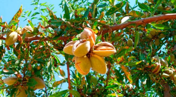 ESLA, planta de almendro y más cultivos agroforestales